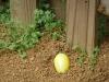 P1240484_Happy Easter.jpg